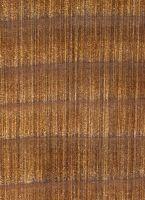 Western Red Cedar (Thuja plicata): Querschnitt (ca. 12x)  © Thünen-Institut