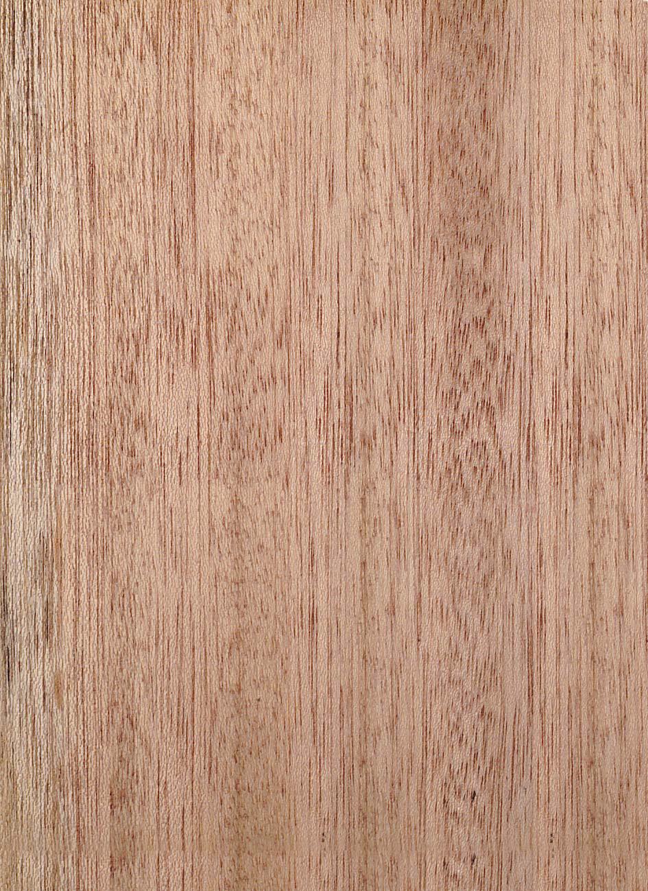 Meranti Rotes Merkmale Eigenschaften Holz Vom Fach