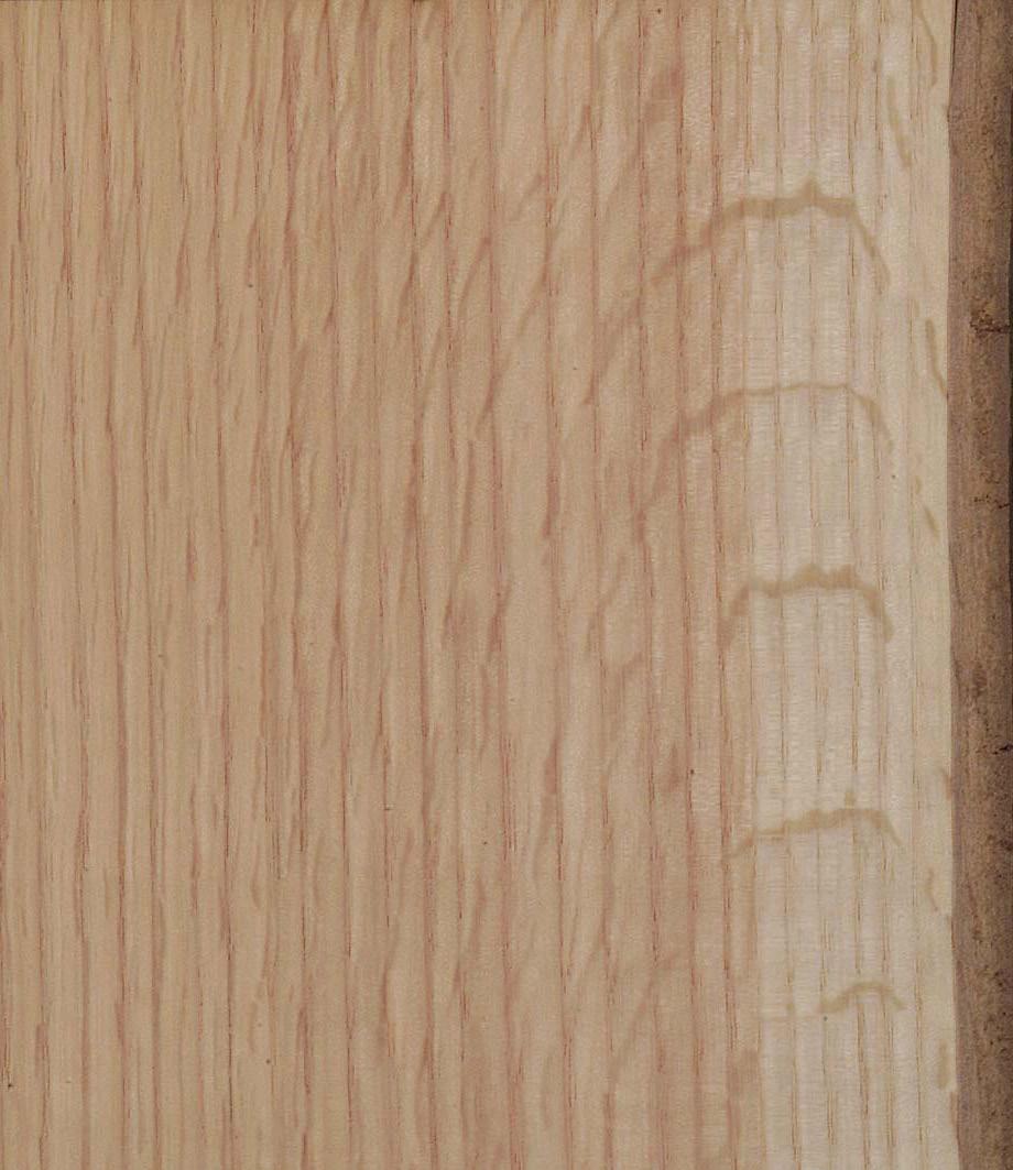 Eiche Merkmale Eigenschaften Holz Vom Fach