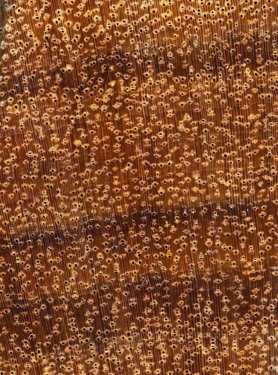 Cumaru Merkmale Eigenschaften Holz Vom Fach