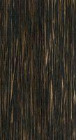 Black palm (Iriartea deltoidea) – Oberfläche in natürlicher Größe