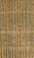 Platane (Platanus occidentalis) – Querschnitt 10x