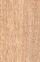 Okoumé (Aucoumea klaineana) – tangentiale Oberfläche (natürliche Größe)