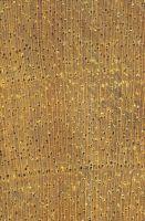 Birke (Betula sp.): Querschnitt (ca. 12x)