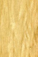 Limba (Terminalia superba, helles Holz) – tangentiale Oberfläche (natürliche Größe)