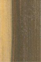 Pukté (Terminalia buceras): Radiale Oberfläche (natürliche Größe)