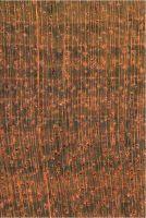 Chechén (Metopium brownei): Querschnitt (ca. 12x)