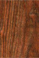 Chechén (Metopium brownei): Längsfläche (natürliche Größe)
