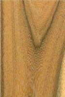 Jabín (Piscidia piscipula): Tangentiale Oberfläche (natürliche Größe)