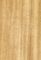 Agba (Gossweilerodendron balsamiferum) – radiale Oberfläche (natürliche Größe)
