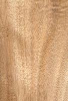 Okoumé (Aucoumea klaineana) – radiale Oberfläche (natürliche Größe)
