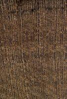Ziricote (Cordia dodecandra) – Querschnitt ca. 10x