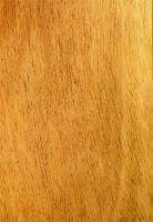 Bilinga (Nauclea diderrichii) – tangentiale Oberfläche (natürliche Größe)