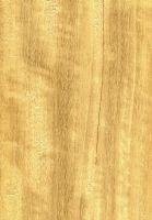 Movingui (Distemonanthus benthamianus) – radiale Oberfläche (natürliche Größe)