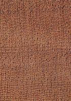 Bossé (Leplaea cedrata) – Querschnitt (ca. 12x)