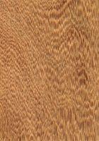 Cambará (Erisma uncinnatum) – tangentiale Oberfläche (natürliche Größe)