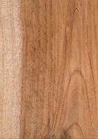 Cedro (Cedrela odorata): Tangentiale Oberfläche (natürliche Größe)