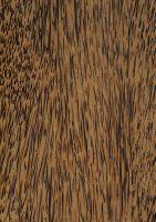Kokospalme (Cocos nucifera): Längsfläche des Bereichs Außen (A) (unten, natürliche Größe)