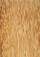 Kokospalme (Cocos nucifera): Längsfläche des Bereichs Mitte (B) (unten, natürliche Größe)