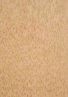 Kokospalme (Cocos nucifera): Längsfläche des Bereichs Innen (C) (unten, natürliche Größe)