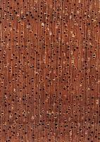 Okoumé (Aucoumea klaineana) – Querschnitt (ca. 12x)