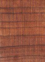 Eastern redcedar (Juniperus virginiana): Querschnitt (ca. 12x)