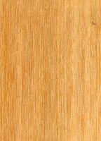 Punah (Tetramerista glabra): Radiale Oberfläche (natürliche Größe)