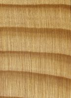 Weißtanne (Abies alba): Querschnitt (ca. 12x)