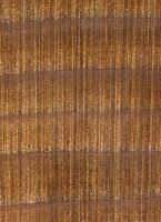 Western Red Cedar (Thuja plicata): Querschnitt (ca. 12x)