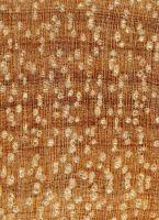 Piquiá (Caryocar glabrum): Querschnitt (ca. 12x)