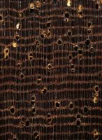 Azobé, (Lophira alata.): Querschnitt (ca. 12x)