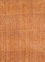 Lenga (Nothofagus pumilio): Querschnitt (ca. 12x)