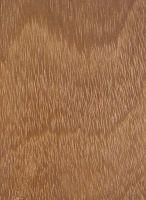 Tatajuba (Bagassa guianensis) – Tangentiale Oberfläche (natürliche Größe)