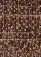 Jatobá (Hymenaea spp.): Querschnitt (ca. 10x)