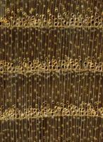 Esche (Fraxinus spp.) – Querschnitt (ca. 12-fach)