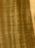 Mangium (Acacia mangium): Radiale Oberfläche (natürliche Größe)