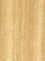 Weißes Meranti (Shorea sp.): Radiale Oberfläche (natürliche Größe)