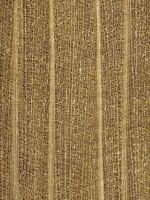 Hainbuche (Carpinus betulus): Querschnitt (ca. 12x)