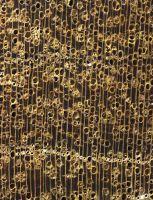 Bangkirai (Shorea spp.) – Querschnitt (ca. 12-fach)
