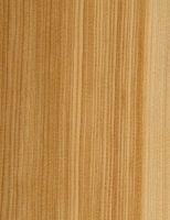 Lärche (Larix sp.):Radiale Oberfläche (natürliche Größe)