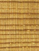 Fichte (Picea abies): Querschnitt (ca. 12x)