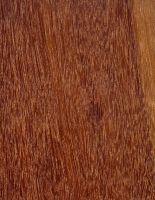 Massaranduba (Manilkara sp.) – Tangentiale Oberfläche (natürliche Größe)