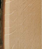 Weißeiche – Radiale Oberfläche (natürliche Größe) mit deutlichen Spiegeln der großen Holzstrahlen