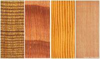 Douglasie (Pseudotsuga menziesii): Querschnitt (ca. 12x) und tan. Oberfläche (natürliche Größe, feinjährige Qualität vom Naturstandort)