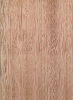 Rotes Meranti (Shorea sp.) – Radiale Oberfläche (natürliche Größe)