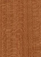 Kirschbaum (Prunus spp.): Radiale Oberfläche (natürliche Größe) � Thünen-Institut